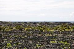 Vinayards at Pico, Azores Stock Photography