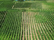 Vinayardspercelen Stock Foto