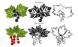Vinbär för bär för vektoruppsättningträdgård Royaltyfri Bild