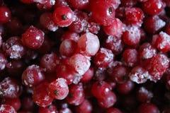 vinbär fryst red Arkivfoto