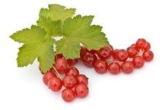vinbär isolerad red fotografering för bildbyråer