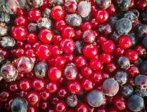 Vinbär och blåbärbakgrund royaltyfri bild