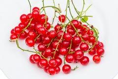 vinbär plate röd white Arkivfoton