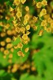 Vinbärgrupp med härligt litet blomma för blommor arkivbild