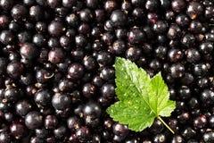Vinbärsvart Jordgubbar, blåbär, hallon och Blackberry Ny organisk vinbärtextur Arkivfoto