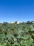 Vinbransch i den Maipo dalen, Chile Royaltyfri Foto