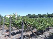 Vinbransch i den Maipo dalen, Chile Fotografering för Bildbyråer