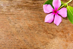 Vinca flower on wood board Stock Images