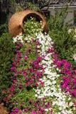 Vinca rosea flowers decoration Stock Images