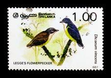 Vincens do ` s Flowerpecker Dicaeum de Legge, serie dos pássaros, cerca de 1987 Fotografia de Stock
