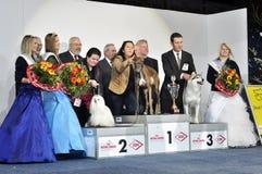 Vincitori dell'esposizione di cane. Grayhound Fotografie Stock Libere da Diritti
