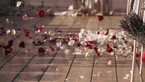 Vind får upp härliga kronblad av steg blommor på gatan röd white swallowtail för sommar för fjärilsdaggräs solig Varmt skuggar arkivfilmer