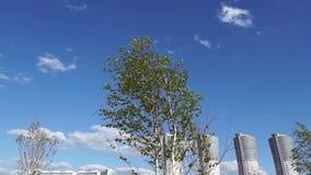Vind flyttar trädfilialer och skyskrapakomplexet lager videofilmer