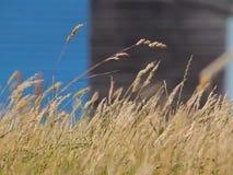 Vind i gräset arkivfilmer