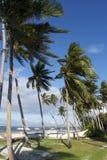 Vind i kokospalmer, Panglao ö, Bohol, Filippinerna Royaltyfria Foton
