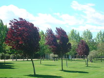 Vind i träden Arkivfoton