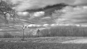 Vind maler lantligt landskap för Arkivfoto