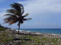 Vind mot Pam Tree på den Unkept stranden royaltyfri bild