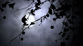 Vind och fullmåne lager videofilmer