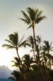 Vind som blåser palmträd Arkivbild