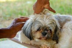 Vind vlo aan een hond stock fotografie