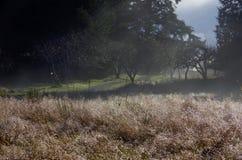 Vindar för en bana till och med träden, medan i förgrunden dagget glittrar på det långa gräset Arkivfoto