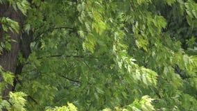 Vinden skakar sidorna av träden under en hällregn stock video