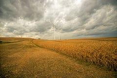 Vindkraft i fälten fotografering för bildbyråer