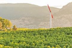 Vindmaskin i vingårdlandskap på solnedgången med berg i bakgrund arkivfoton