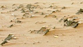Vindspår i sandbakgrunden Royaltyfria Foton