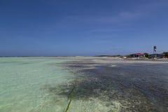 Vindsurfar det karibiska havet för den Bonaire ön lagun Sorobon Royaltyfri Bild