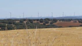 Vindturbiner i öknen av Spanien lager videofilmer