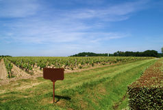 Vine. Agriculture yard outdoors landscape Stock Photography