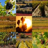 Vine Stock Photos
