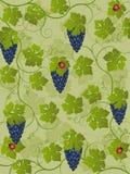 Vine. Floral background with vine. Vector illustration Royalty Free Stock Image