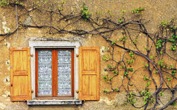 The vine. A vine on the front of a farm. Photo taken in the french countryside stock photos