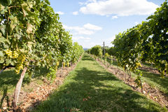 Vine alley Stock Images