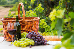 Vine And Grape Bunches Stock Images