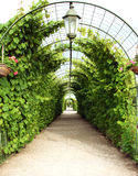 Vine arbor tunnel stock photography
