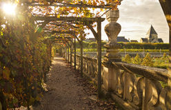 Vine arc in a garden Stock Photography