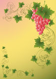 Vine_background Stock Photography