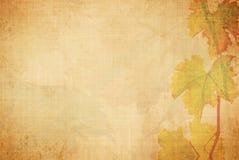 Vine background Stock Photo
