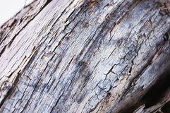 Vine. The bark of the old, with the cracks of the vine stock images