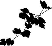 Vine black silhouette Royalty Free Stock Photo