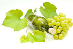 Vine and bottle. Of wine Stock Images