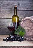 Vine Royalty Free Stock Image