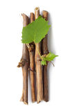 Vine branch Stock Images