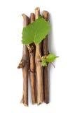Vine branch Stock Images