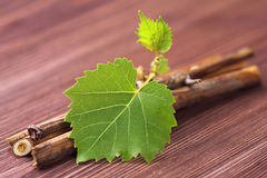 Vine branch Royalty Free Stock Images