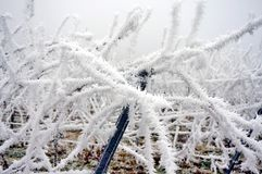 Vine branches covered by ice after the freezing rain in the winter after a freezing rain storm and on one day with a fog. stock images